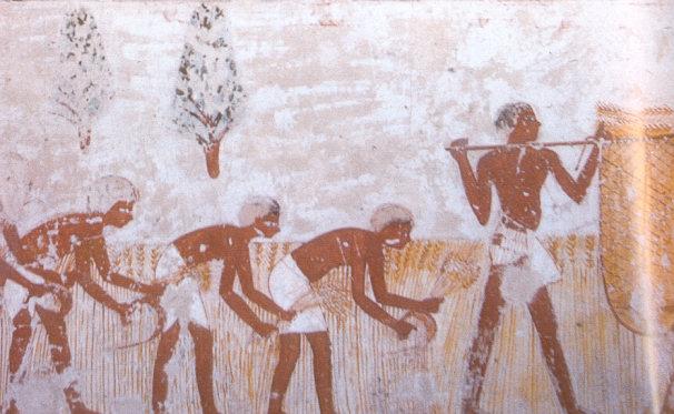 http://mythologica.fr/egypte/civil/pic/agriculture_03.jpg